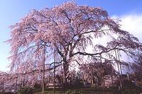 Maruyama_1